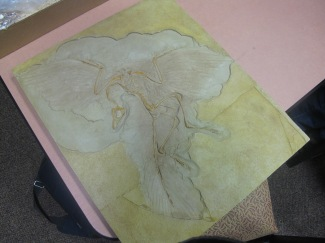 The Archaeopteryx fossil cast displays evidence of feathers and enlargement of the brain seen in birds today.