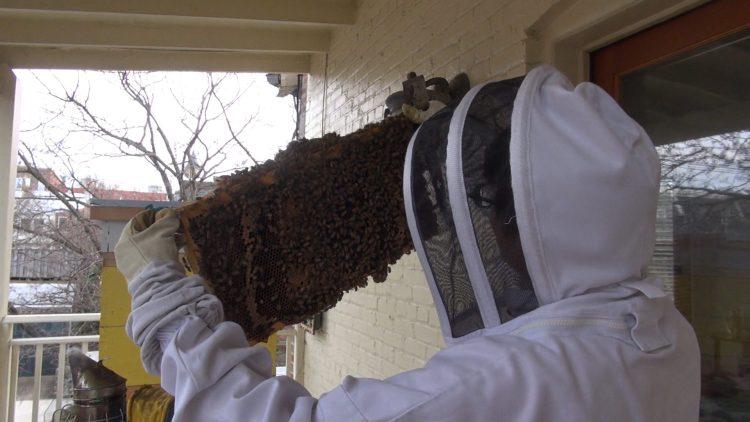 Beekeeper holding bee hive
